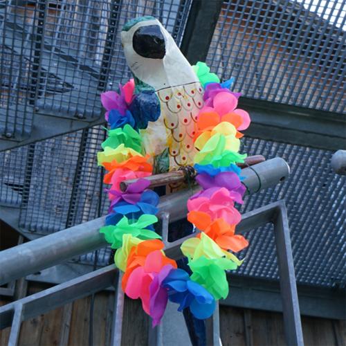 Kulturtage 17 - Paradiesvögel